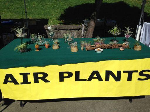 Air Plants 2015
